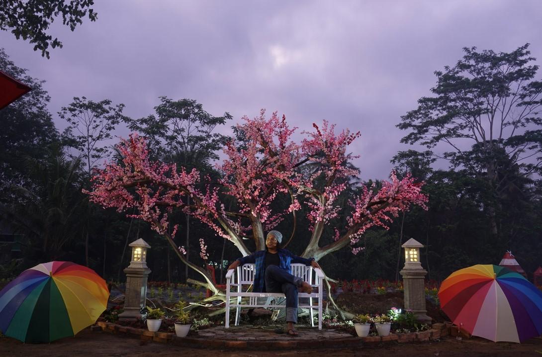 bunga sakura di taman ramadanu